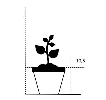 10,5 cm. potte