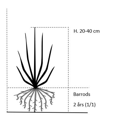 Barrods,- 2 års (1/1) 20-40 cm.