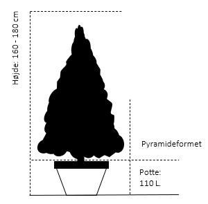 Pyramide 160-180 cm. Potte 110 liter