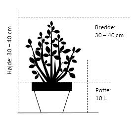 Potte 10 liter 30-40 cm. diameter