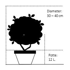 Potte 12 liter 30-40 cm. diameter