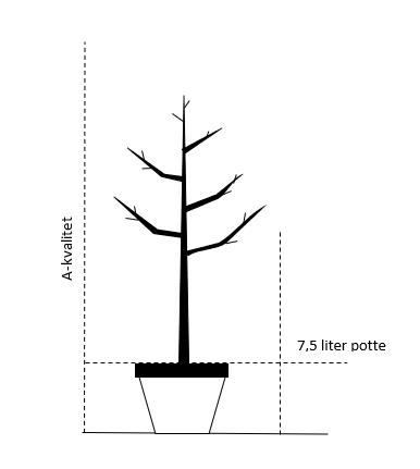 7,5 liter potte - A. kvalitet