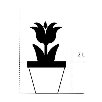 2 liter potte med blomsterknopper