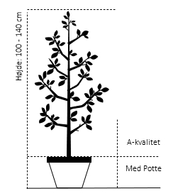 Potte, -A-Kvalitet højde 100/140 cm.