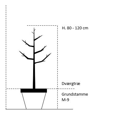 Dværgtræ M-9 højde 80/120 cm.