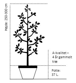 Potte, -A-Kvalitet 4 år gammel 37,5L højde 250/300 cm.