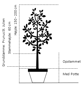 Potte, -A-Kvalitet S.J.-A højde 150/200 cm.