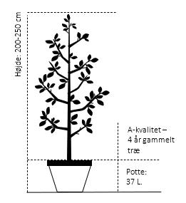 Potte, -A-Kvalitet 4 år gammel 37,5L højde 200/250 cm.