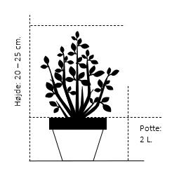 Potte 2,0 liter,- 20-25 cm.