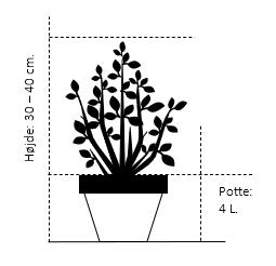 Potte 4,0 liter,- 30-40 cm.