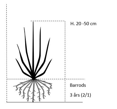 Barrods,- 3 års (2/1) 20-50 cm.