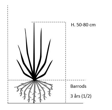Barrods,- 3 års (1/2) 50-80 cm.