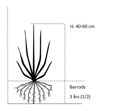 Barrods,- 3 års (1/2) 40-60 cm.