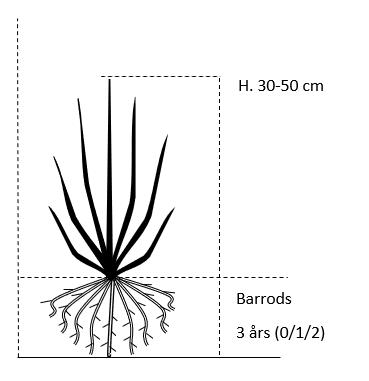 Barrods,- 3 års (0/1/2) 30-50 cm.