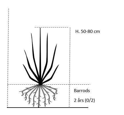 Barrods,- 2 års (0/2) 50-80 cm.