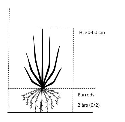 Barrods,- 2 års (0/2) 30-60 cm.