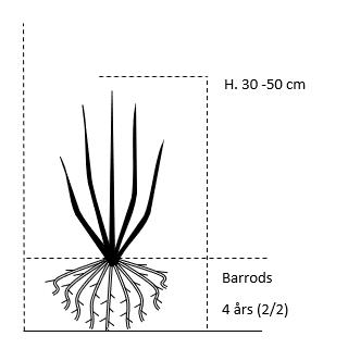 Barrods,- 4 års (2/2) 30-50 cm.
