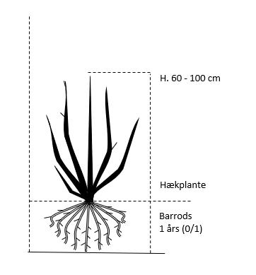 Barrods,- 1 års (0/1) 60-100 cm.
