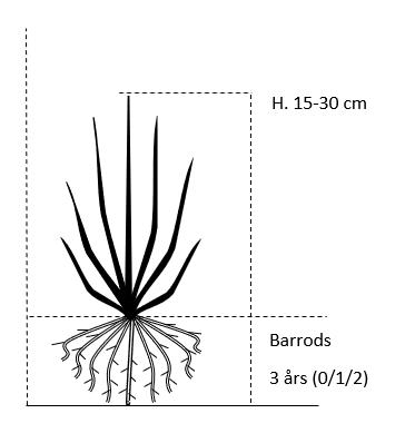 Barrods,- 3 års (0/1/2) 15-30 cm.