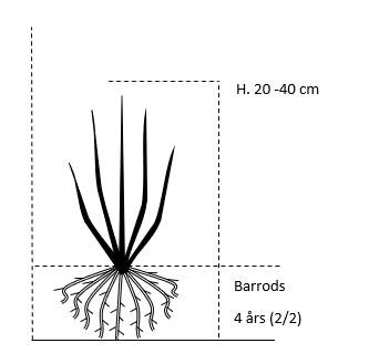 Barrods,- 4 års (2/2) 20-40 cm.
