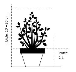 Potte 2,0 liter,- 10-20 cm.