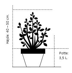Potte 3,5 liter 40-50 cm.