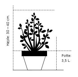 Potte 3,5 liter 30-40 cm.