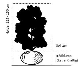 Trådklump,- 125-150 cm.