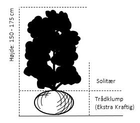 Trådklump,- 150-175 cm.