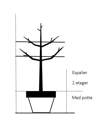 Espalier 2 etager,- med potte