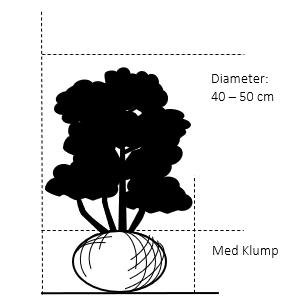 Med klump,- 40-50 cm. Diameter