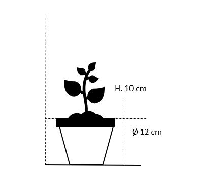 12 cm. potte