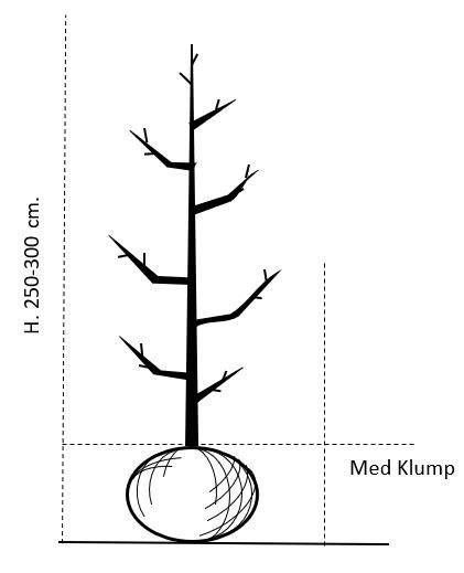 250-300 cm.,- med klump
