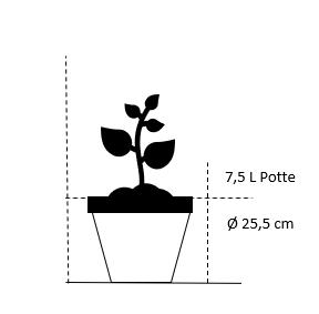 7,5 liter potte