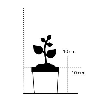 10 cm. potte