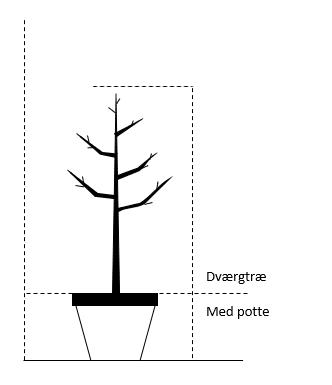 Dværgtræ, med potte