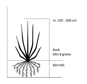 Busk,- barrods- minimum 8 grene -  150-200 cm.