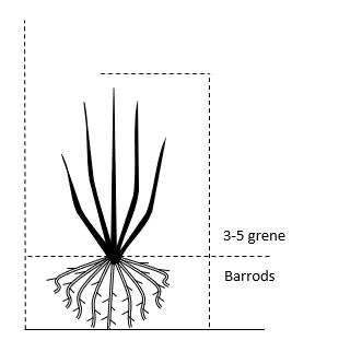 Barrods,- 3-5 grene