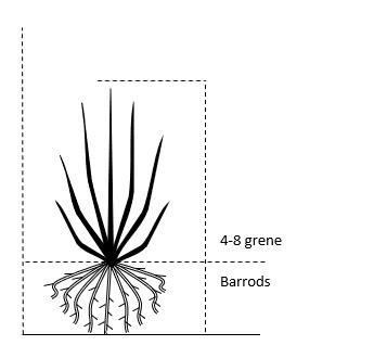 Barrods,- 4-8 grene
