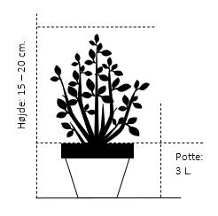 Potte 3,0 liter,- 15-20 cm.