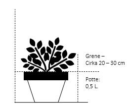 Potte 0,5 liter, 15-20 cm.
