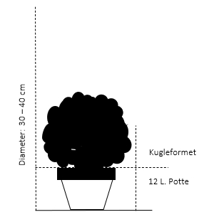 Kugle 35-40 cm. Med potte