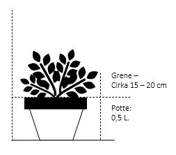 Potte 0,5 liter,- 15-20 cm.