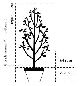 Potte, A-kvalitet G*5 Søjletræ 100 cm.