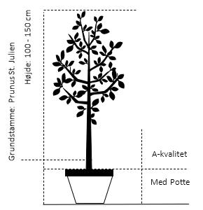 Potte, A-kvalitet S.J. -A,- 100-150 cm.