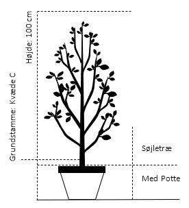 Potte, A-kvalitet K.V-C Søjletræ 100 cm.