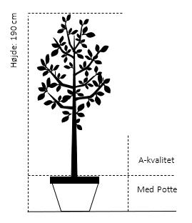 Potte, A-kvalitet 190 cm.